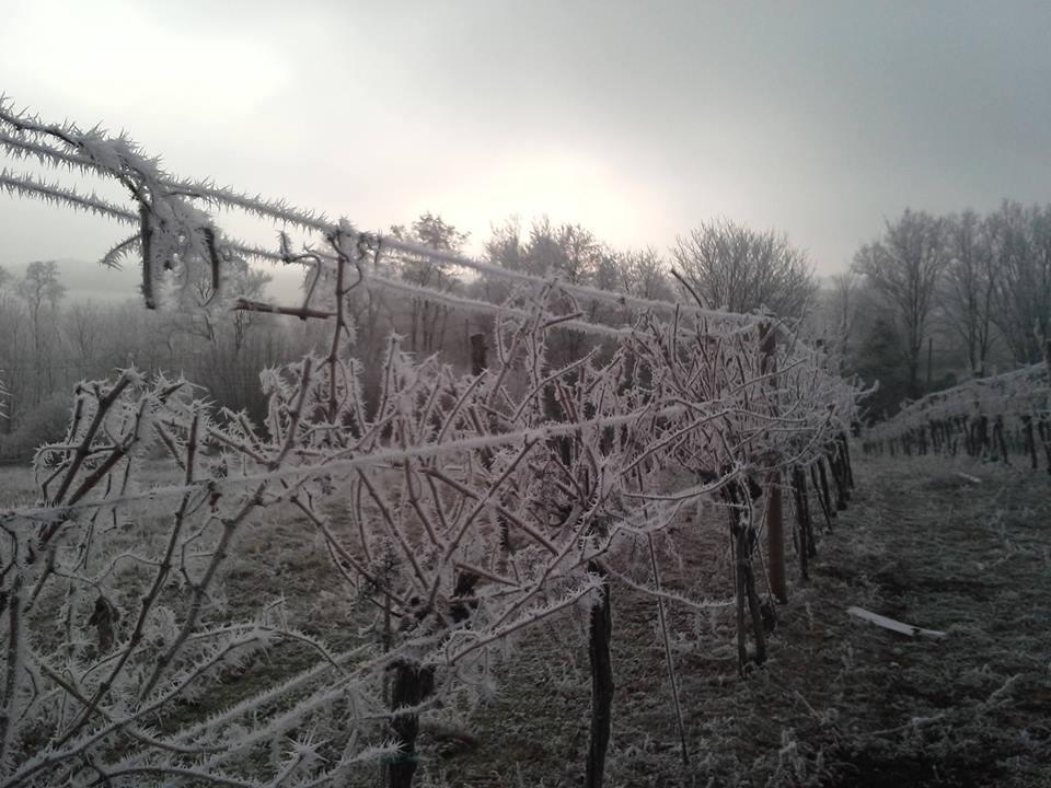Schneiden im Winter