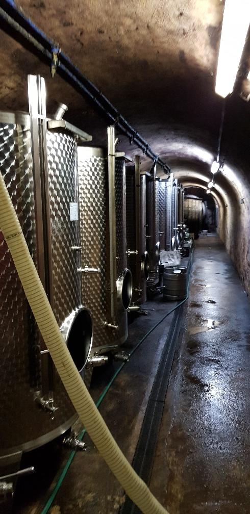 Hier lagert unser Wein unter perfekten Temperaturverhältnissen - konstanten 8 bis 10 Grad Celsius - und wartet nurmehr auf die Abfüllung in die Flaschen.